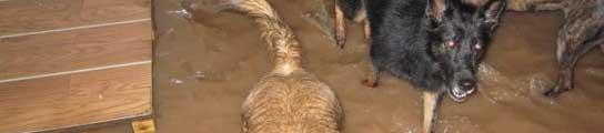 385 perros de las protectoras de Carcaixent y Xàtiva pueden morir ahogados por el diluvio  (Imagen: 20MINUTOS.ES)