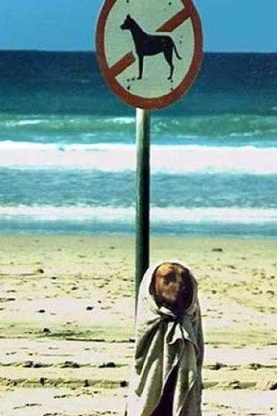 Perro camuflado en la playa.