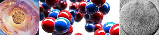 Celula y moléculas
