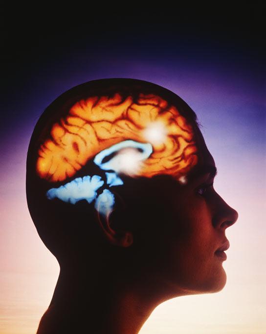Cu nto tarda el cerebro en encontrar la palabra exacta - Cuanto tarda un tasador en tasar un piso ...