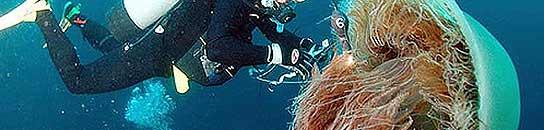 Hallan una medusa gigante de 20 kilos en aguas del Estrecho de Gibraltar  (Imagen: ARCHIVO)