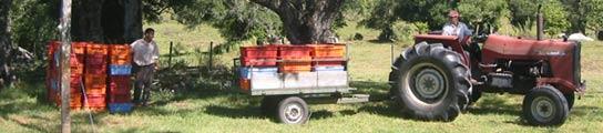 Los cacos arrasan el campo  (Imagen: 20MINUTOS.ES)