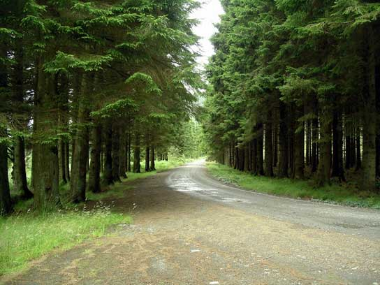 Parque del Bosque de Galloway