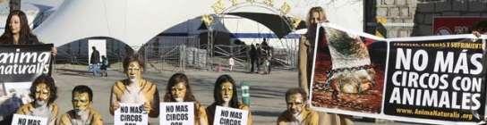 San Fernando de Henares vetará la instalación de circos que exhiban  animales  (Imagen: ARCHIVO)