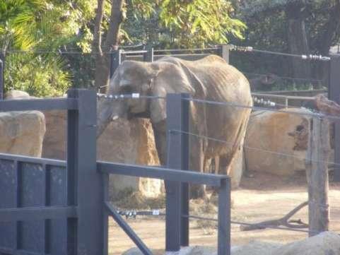 La elefanta 'Susi'.