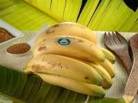 El Plátano de Canarias es el