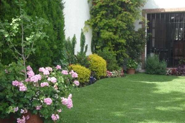 C mo plantar y trasplantar en tu jard n for Arbustos con flores para jardin