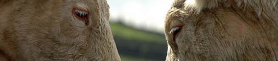 Descubren la relación que existe entre la orientación animal y la  física cuántica  (Imagen: John Leach. Everystockphoto.)