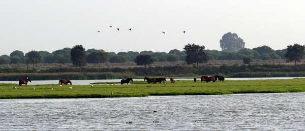Hiraldo (CSIC) lamenta que el ser durante 30 años 'Reserva de la Biosfera' no haya supuesto para Doñana