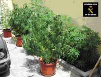 Detienen a una persona que tenía una plantación de marihuana en su casa en Alhaurín de la Torre