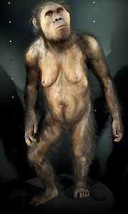 <p>Museo de la Evolución Humana en Burgos</p>