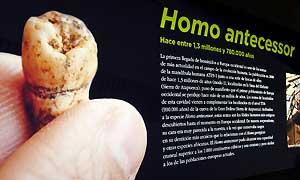 <p>Museo de la Evoluci�n Humana en Burgos</p>