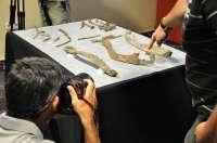 El hallazgo de armas de hace 2.400 años confirma a La Bastida como el poblado peninsular íbero
