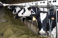 Cantabria alcanza los 26,60 derechos de vaca nodriza por solicitante