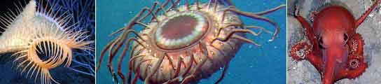 Especies del Censo de Vida Marina