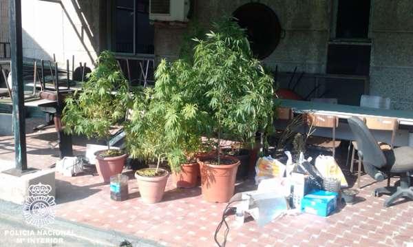 La Policía detiene a una pareja tras confiscar nueve plantas de marihuana en su piso de Patraix