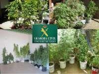 La Guardia Civil detiene a siete vecinos de Monroy (Cáceres) que tenían cultivadas 32 plantas de marihuana