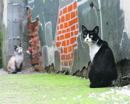 Proponen esterilizar a todos los gatos en Bélgica 1122066