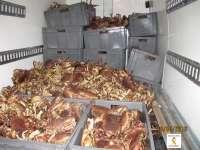 Decomisadas 2,4 toneladas de marisco en Asturias, en un camión que procedía de Escocia e iba a Galicia