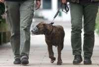 Una ordenanza regulará la tenencia de animales en la vía pública en Soutomaior, con multas de hasta 600 euros