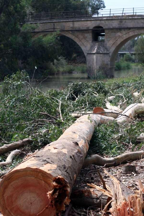 Comienzan las obras de recuperación del río Guadalete tras las inundaciones del pasado invierno