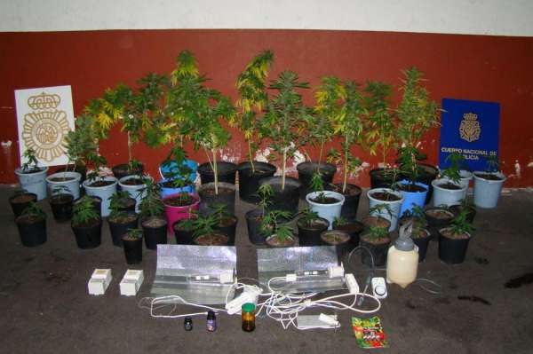 Detienen en Tenerife a un joven que cultivaba en su domicilio 48 plantas de marihuana
