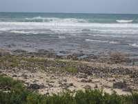 Recogidas 420 toneladas de seba de las playas de El Cotillo (Fuerteventura)