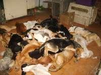 Piden ampliar la acusación por maltrato animal al dueño y la directora de la perrera de Puerto Real