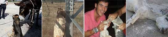 La lacra del maltrato animal en España