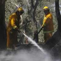Asemfo alerta de que los recortes en materia forestal en CyL  harán desaparecer el 80% de las empresas del sector