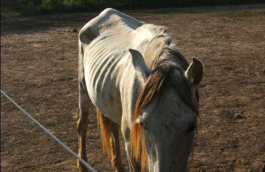 Dejan morir de hambre a más de 300 caballos 1169652