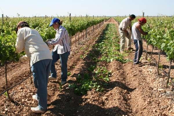 Agricultores trabajando