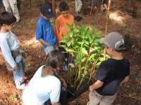 El Cabildo de Tenerife organiza una jornada de reforestación en La Orotava con motivo del Día del Árbol Canario