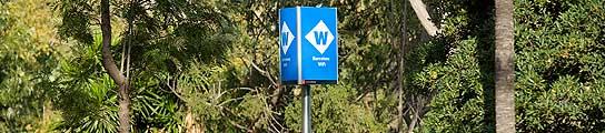 Las redes WiFi dañan a los árboles  (Imagen: ARCHIVO)