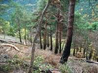 Aran limpia más de 20 hectáreas de bosque y aprovecha la madera como energía de biomasa