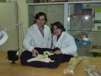 La Universidad de Zaragoza descubre en Arén (Huesca) una especie de dinosaurios desconocida en Europa