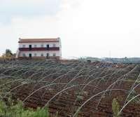 El viento provoca daños en infraestructuras de fincas freseras de Moguer y Mazagón