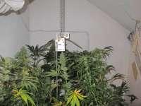 Detenido un vecino de Orkoien por cultivar marihuana en el trastero de su vivienda