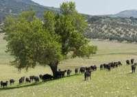 La Junta aprueba subvenciones por más de 78 millones paragenerar de 5.100 empleos en el medio rural