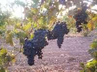 Grupo Rioja manifiesta su