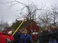 El Serida organiza una jornada de poda y cuidados de invierno en plantaciones de manzano de sidra