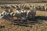 El Gobierno de La Rioja destina un millón de euros a los sistemas de producción sostenible en el sector ganadero