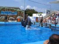 Marineland Mallorca abre este lunes sus puertas al público estrenando  un nuevo delfinario y un acuario panorámico
