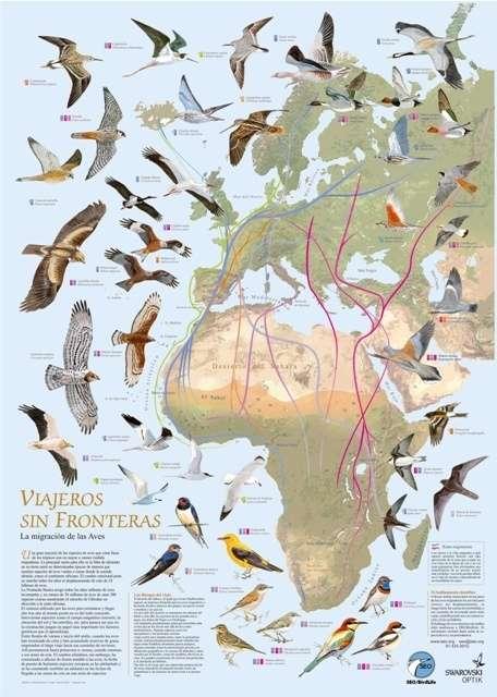 SEO/BirdLife celebra el Día de las Aves Migratorias con una ruta ornitológica por las Marismas de Astillero