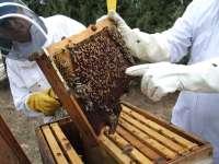 La comarca cacereña de Las Hurdes dedica unas jornadas a la miel