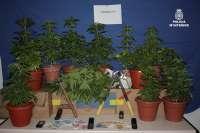 Detenidos tres jóvenes en Badajoz cuando transportaban en su coche ocho plantas de marihuana