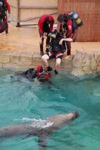 Aqua Natura desarrolla una actividad de buceo adaptado para discapacitados con leones marinos