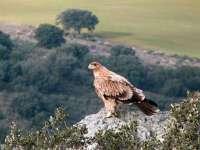 El montañero Jesús Calleja apadrina tres pollos de águila imperial  nacidos en el Parque de Cabañeros (Ciudad Real)