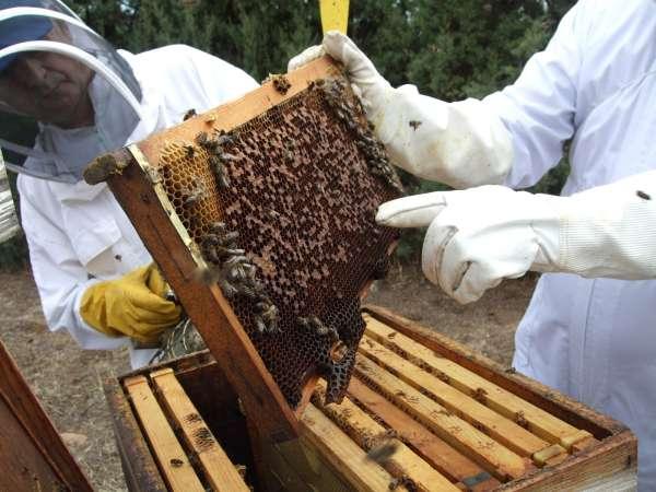 COAG impulsa candidatura de las abejas y la apicultura como Patrimonio de la Humanidad por la Unesco