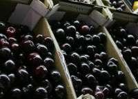 La localidad oscense de Bolea celebra este domingo la XII edición de su Feria de la Cereza